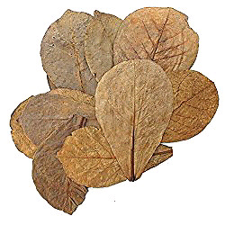XL almond leaves