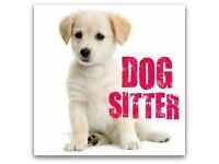 ** Small Dog Sitter Required ** - 2 days per week