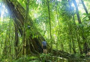 Travel Mate/Ride Share to Daintree wanted ~7.11. Parramatta Park Cairns City Preview