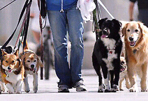 Promeneur De Chien / Dog Walking Service.