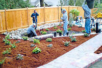 Cedar Mulching Flower Bed Repair Perennials Top Soil Upgrades