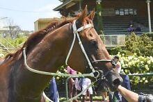 Wanted Horse agistment in Pallara / Doolandella Doolandella Brisbane South West Preview