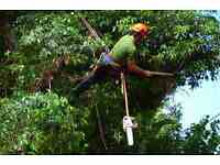 *Experienced Professional* *Tree Surgeon* Available For A Fast Service* Call For A Free Quote Today*