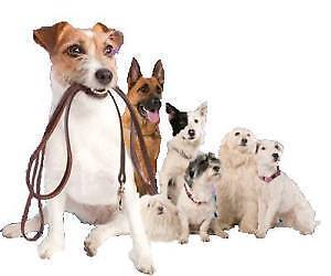 Canine Critters Dog Walking and Pet Sitting - fun, dog-oriented!