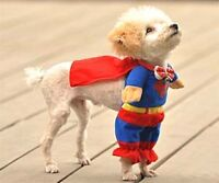 Our little dog is heartbroken ... her SuperMan outfit didnt fit