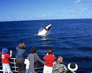 Two oz Whale watching tickets with free BBQ lunch