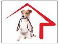 Dog / House Sitter (Kent)