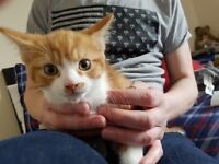 2 male Kittens looking for a new human and a new forever home