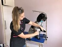 Dog Grooming - Brentwood