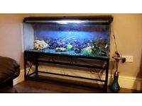 Fish Tank Aquarium 4ft with Stand and hood all included