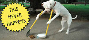 POO CREW TO THE RESCUE! SPRING YARD CLEAN UP OF DOGGY DOO