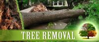 Tree Removal, Trimming and Disposal Service