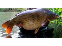 TOP SECRET FIELD TESTING BASE MIX SUPREME BIRD SEED & SMA PROTEIN 5KG BOILIES.**
