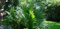 Need artificial tropical plants - ferns etc.
