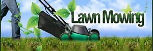 Lawn mowing and maintenance Cannonvale Whitsundays Area Preview