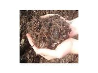 FINE GRADE ORGANIC SPENT MUSHROOM COMPOST Perfect for Borders raised beds window boxes baskets lawns