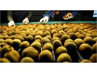 KIWI's for Sale - 50kg