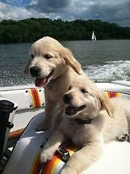 Two Dog Marine