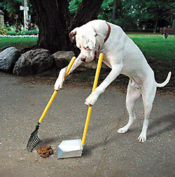 Call of dooty dog poop removal!