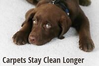 AFFORDABLE CARPET DEEP STEAM CLEANING