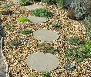 Newly planted demonstration garden with paving plants at Boundary nursery