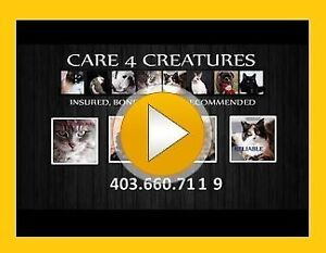 Quality Cat sitting - Care4Creatures - Offering new locations!