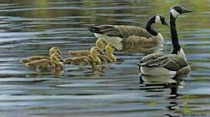 Robert Bateman - Canada Geese with Young (incl Picture Frame)