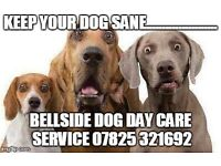 Dog walking, daycare services , walkers, pet sitters, groomer
