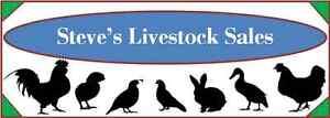 STEVES LIVESTOCK SALES Northcote Darebin Area Preview