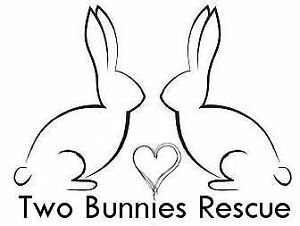 Two Bunnies Rabbit and Small Animal Rescue