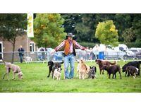 STRADSETT FESTIVALS OF DOGS