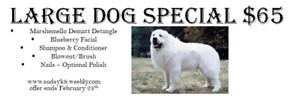 $65 Large Dog GROOMING SPECIAL