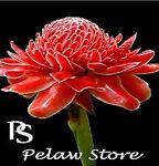 Pelaw Store