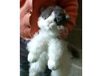 Lost grey and white soft toy cat