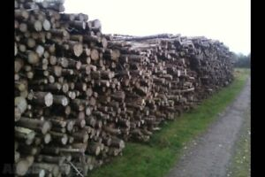 Fire wood 100$ per cord road side or 120$ delivered.