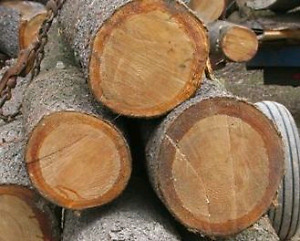 Truck load of white/red pine/Hemlock/Spruce logs WANTED