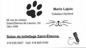 chien et chat  toilettage