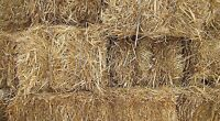 LOOKING FOR: Straw Bales