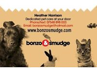 Dog walking and small pet care in Sheffield 8, 7, 17 and Gleadless