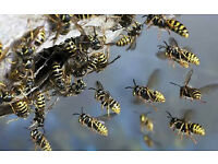 DIAMOND PEST CONTROL DERBYSHIRE - Professional pest control. -- SPECIAL OFFER ! WASP NEST REMOVE £20