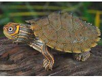 Beautiful amphibian collection