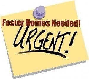 Winnipeg Giant Breed Rescue Needs You!!