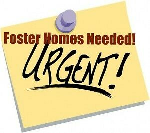 *** FOSTER HOMES NEEDED ***
