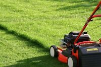 Vite Coupe de gazon prix réduit / hurry grass Cutting good Price