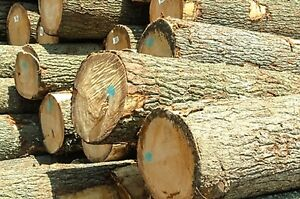 Saw Logs for Sale