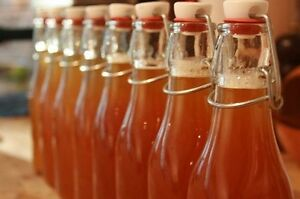 Kombucha SCOBY Culture - Learn to make your own