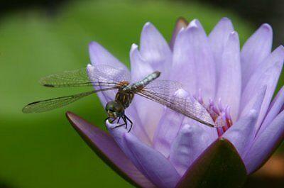 Dragonfly Jewelry Designs & Artwork