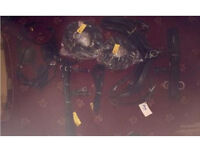 Brand new Horses bridal and harness and rains plus other stuf that comes with it