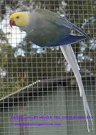 **WANTED,INDIAN RINGNECK PARROTS, PLEASE EMAIL**** High Wycombe Kalamunda Area Preview