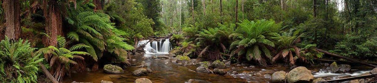 Shingle Mill Creek